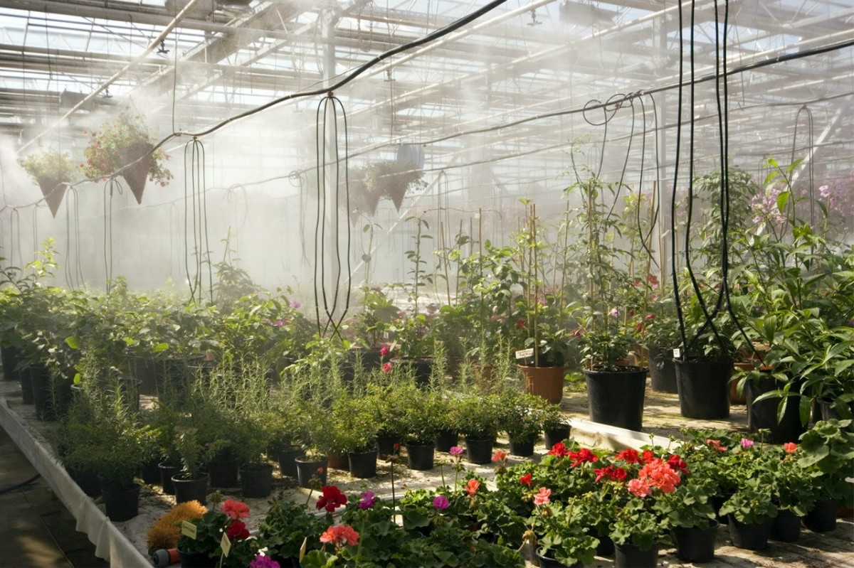 Цветов чите, магазин белая дача растения